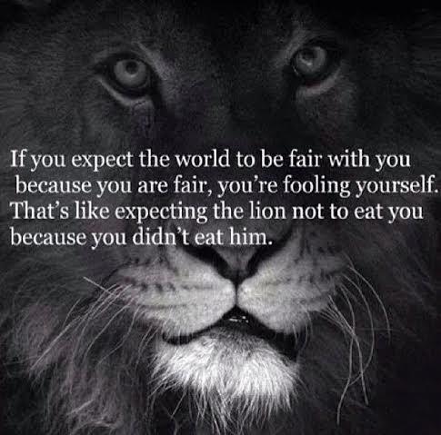 Citat lejon