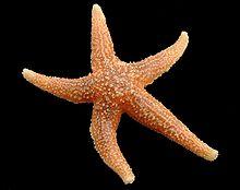 sjöstjärna